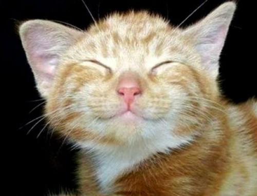 Sorridi, è lunedì!